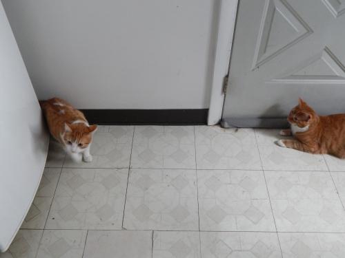 Sammy and Merlin 2