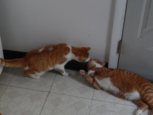Sammy and Merlin 1